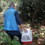 Durante la cuarentena codechocó ha devuelto a su hábitat 21 especies de fauna silvestre
