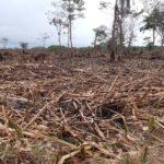 Codechocó atiende incendio forestal en área protegida del darién chocoano